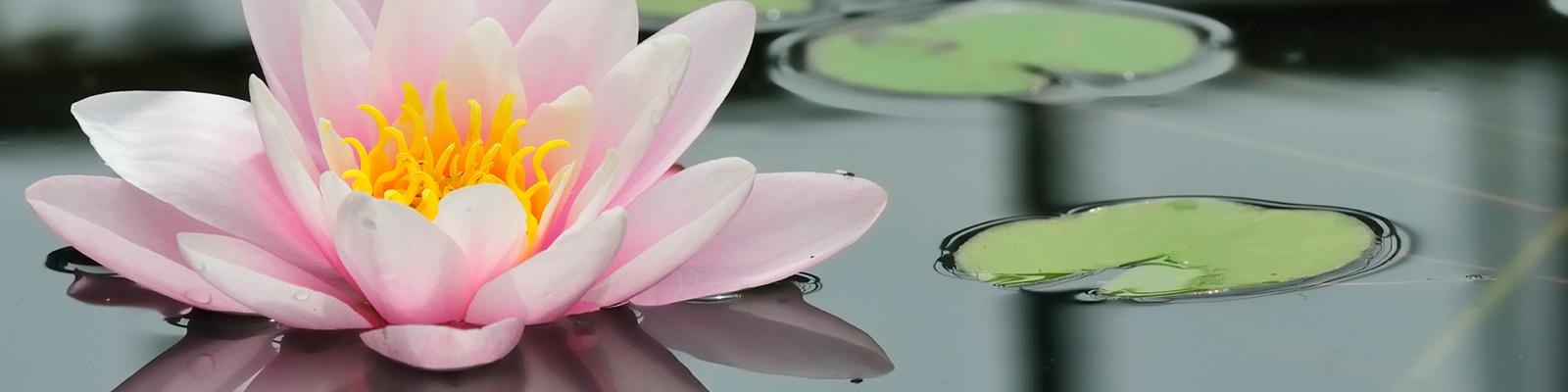 slide-lotus-2
