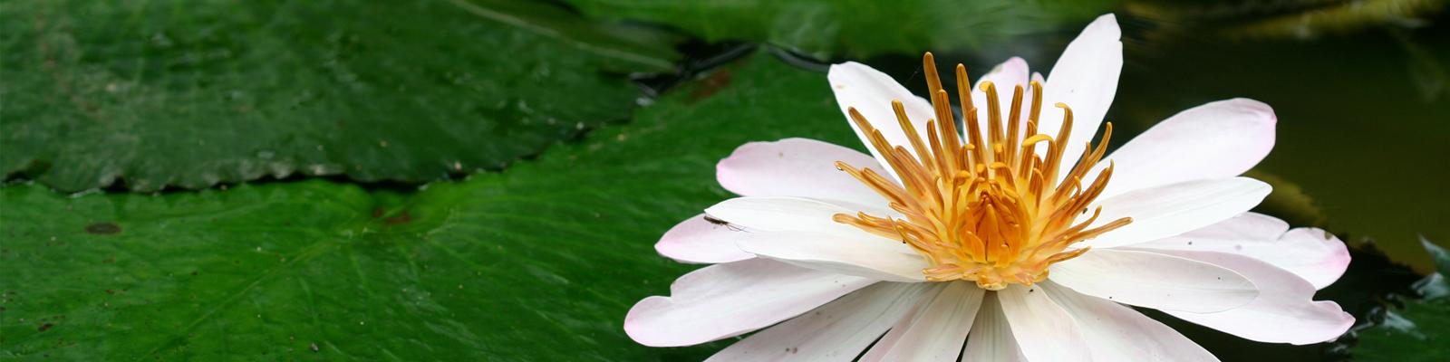slide-lotus-5